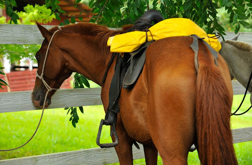 Rainforest Adventure- the horses are well suited for this riding vacation in Costa Rica